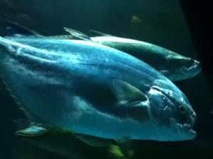 IMG_0092 Fish